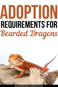 how to adopt a bearded dragon
