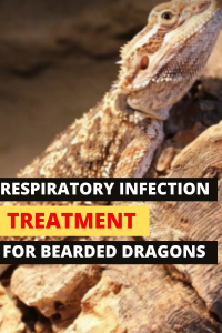 How To Treat A Respiratory Infection In Bearded Dragons