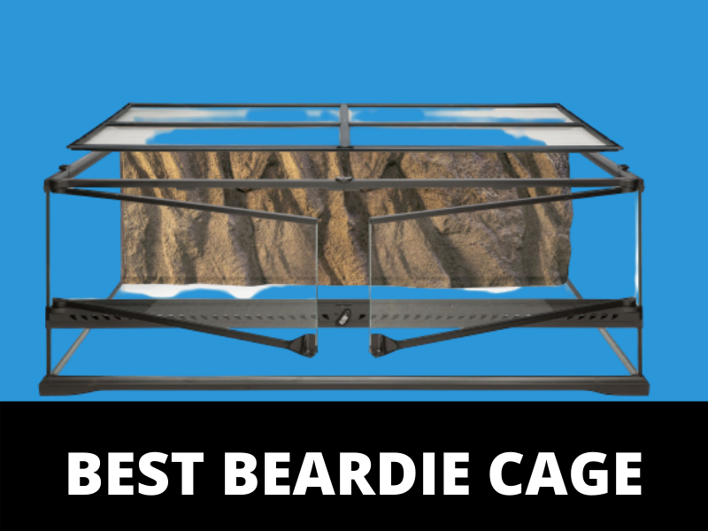 Bearded Dragon Cage Setup