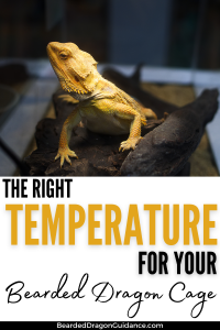 bearded dragon temps