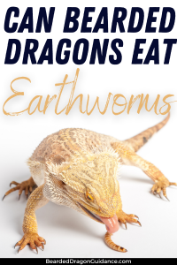 earthworms for bearded dragons