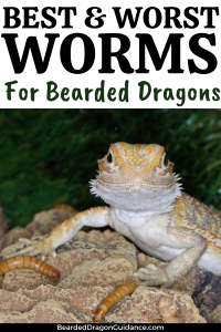 worms for bearded dragons